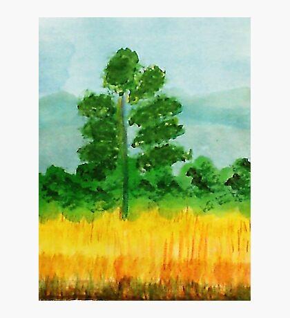 Big Pine alone in field, watercolor Photographic Print