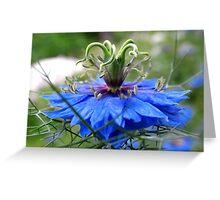 Nigella of Blue Greeting Card
