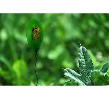 lifes little breezes Photographic Print
