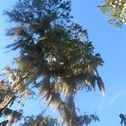 Spanish Moss by SarahMistake