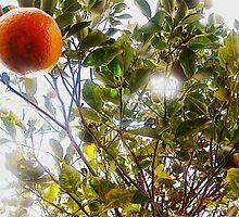 Orange Tree by SarahMistake