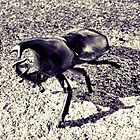 Beetle by mjds