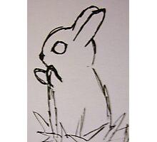 Bunny Hugs Photographic Print