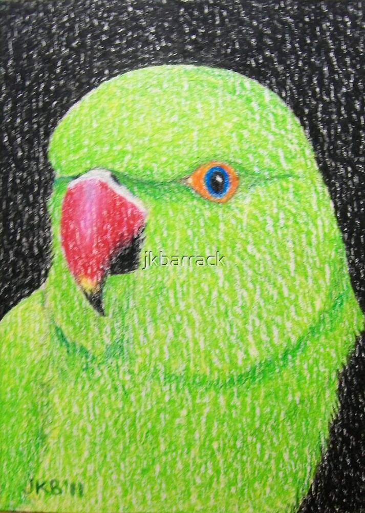 Indian Ringnecked Parakeet by Joann Barrack