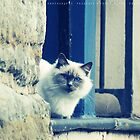 Angry Cat by fRantasy