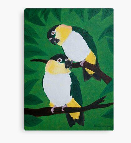 Black Headed Caiques Canvas Print