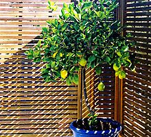 lemon tree - 1st Toyo-G attempt by nadine henley