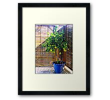 lemon tree - 1st Toyo-G attempt Framed Print