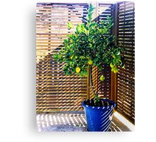 lemon tree - 1st Toyo-G attempt Canvas Print