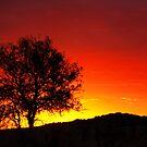 The Burning Bush - near Toowoomba Qld by Beth  Wode