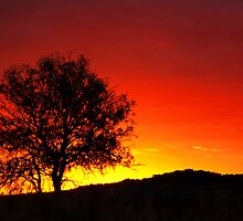 The Burning Bush - near Toowoomba Qld by Beth  Wode
