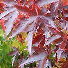 Autumn Leaves by wanderingtrucki
