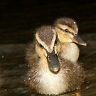 Wild Duckling Siblings by A.M. Ruttle