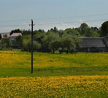 Spring in old farmstead (dandelion bloom) by Antanas