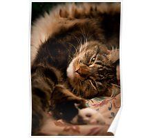 Big Cat Stretch Poster