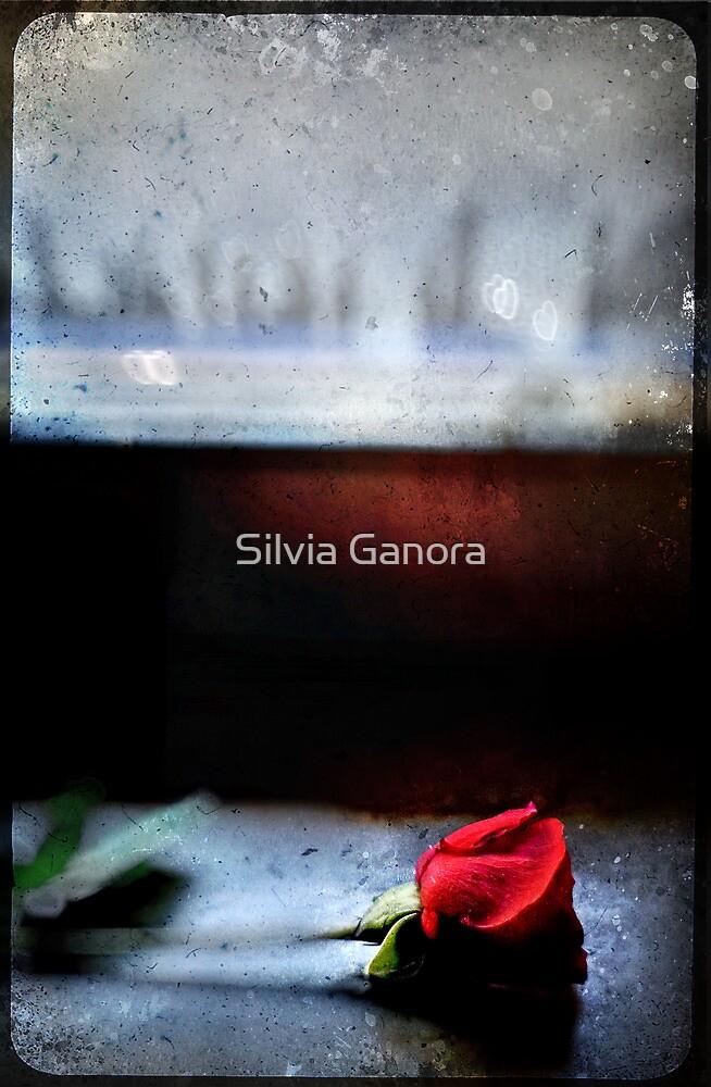 Misty Rose III by Silvia Ganora