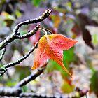 Leaf by Tara Schultz