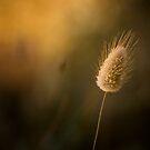Ephemeral Light by Aerouan
