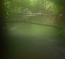 Misty Roger River in far nor west Tasmania , Australia by phillip wise
