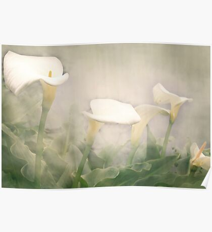 Lillies in the Mist Poster