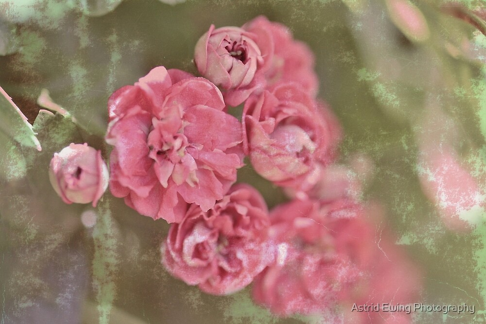 Fragrance in April breezes by Astrid Ewing Photography