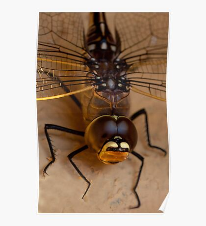 Dragon fly. Poster