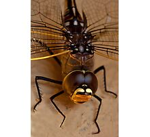 Dragon fly. Photographic Print