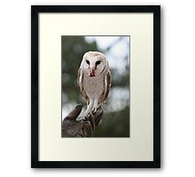 Held Aloft Framed Print
