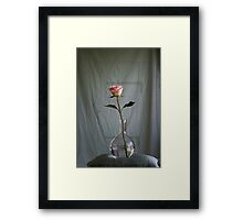 Offer...... a rose Framed Print