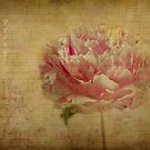 Vintage Peony. by Irene  Burdell