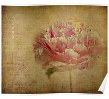Vintage Peony. Poster