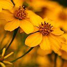 Yellow sun shine by Adriano Carrideo