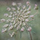 Queen Anne's Lace by Linda Trine