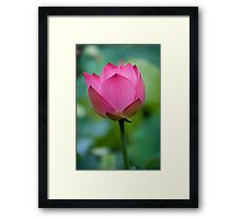 Purity Rose Framed Print