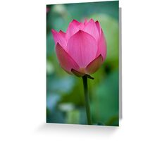 Purity Rose Greeting Card