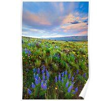 High Desert Spring Poster