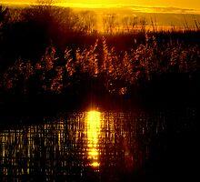 A golden treasure by Alan Mattison