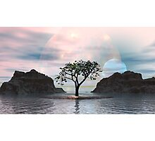 Solar Implosion on Norway Maple Fjord2 Photographic Print