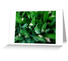 Lovely Lily.... of the Valley that is... Greeting Card