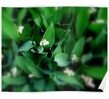 Lovely Lily.... of the Valley that is... Poster