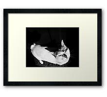 Miaow Moods Framed Print