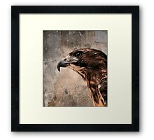 Red Tailed Hawk, Redux Framed Print
