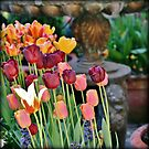 Tuliptastic by Astrid Ewing Photography