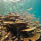 Stack of fish on table coral - Madives by shellfish
