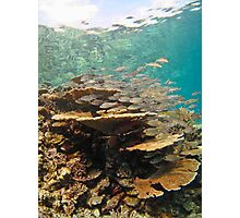 Stack of fish on table coral - Madives Photographic Print