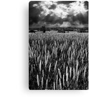 Field and rays Canvas Print