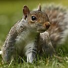 Grey Squirrel - Up Close! by Mark Hughes
