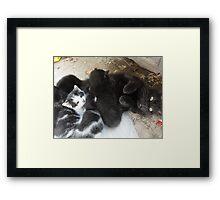 Mum and 4 Kittens Framed Print