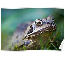 Common Frog in the Grass Poster