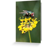 Fly on Fennel Greeting Card